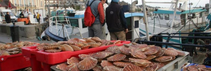 Faute d'accord, la guerre des coquilles Saint-Jacques se poursuit